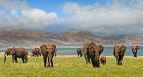 Votre voyage de luxe en Afrique du Sud